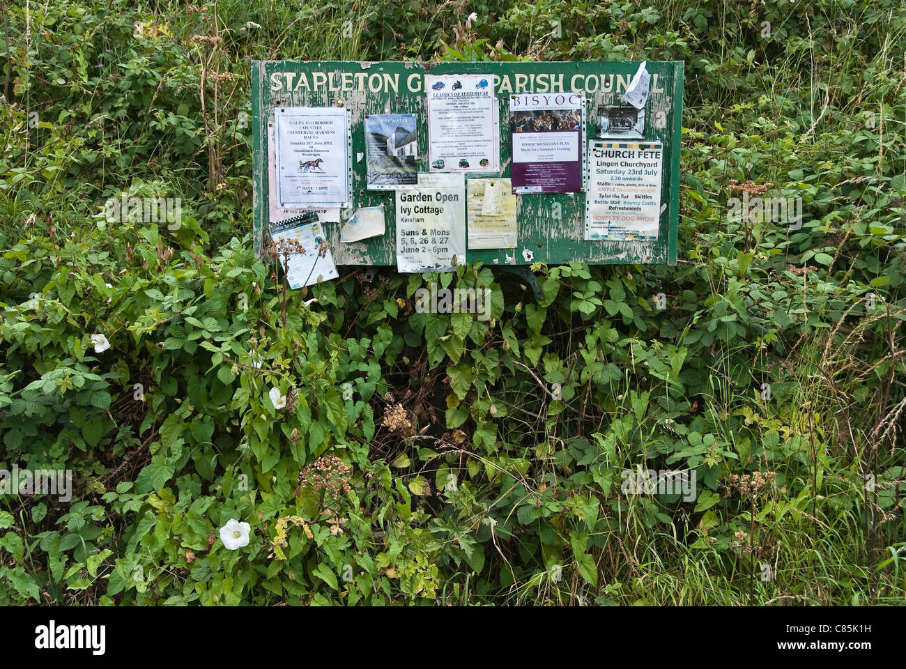 An overgrown village noticeboard in Herefordshire, UK - Stock Image