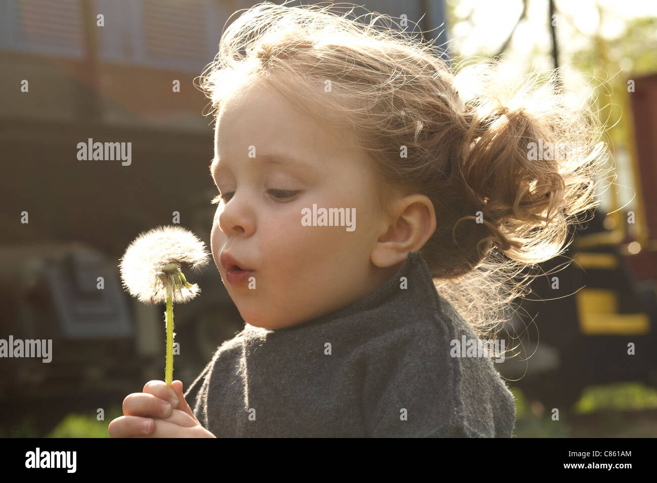 Child blowing a dandelion - Stock Image