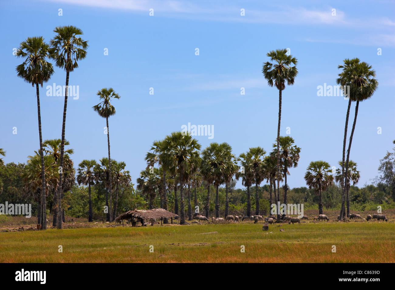 The village of Vemasse, Timor-Leste (East Timor) - Stock Image