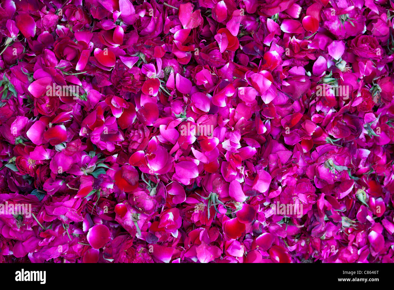 Rose petals for religious ceremonies at Mehrauli Flower Market, New Delhi, India - Stock Image