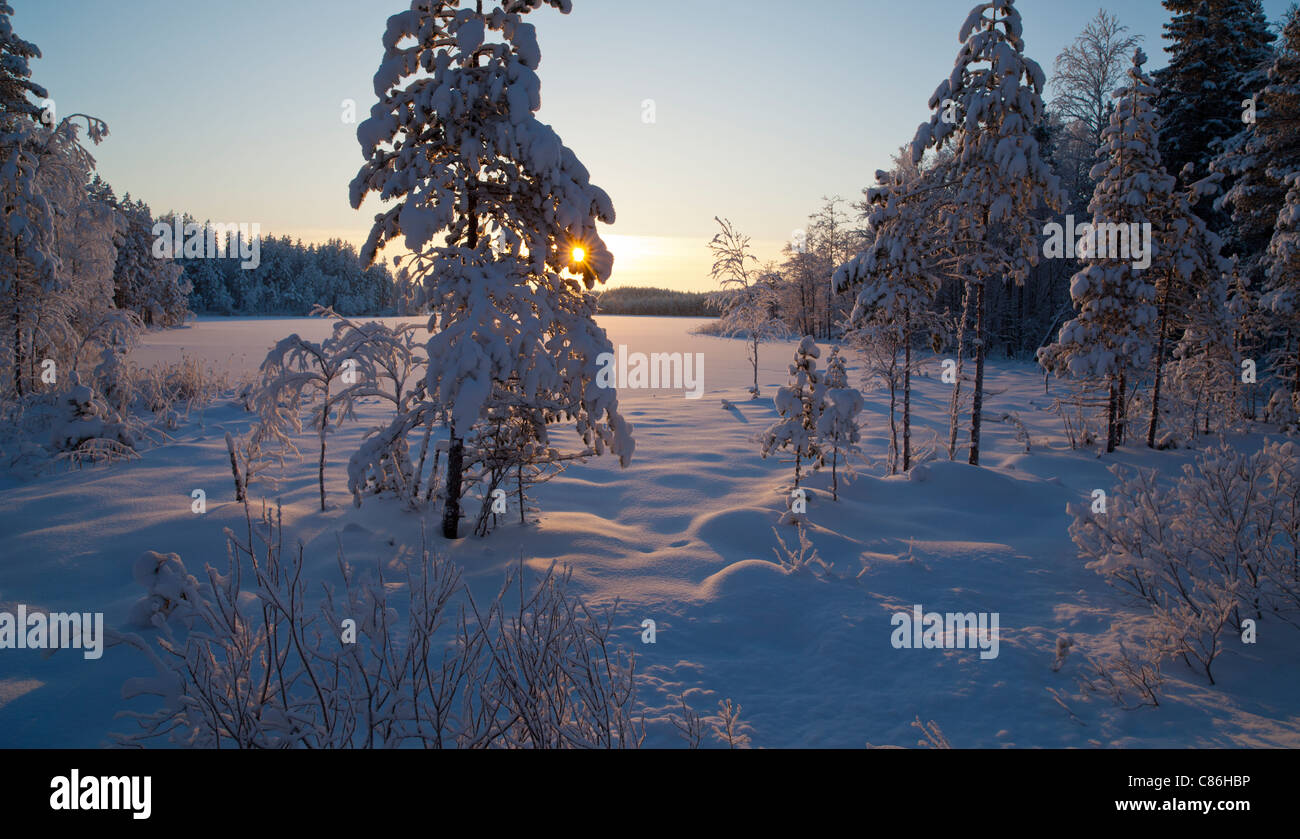 Midwinter scenery of a small forest pond , Finland - Stock Image