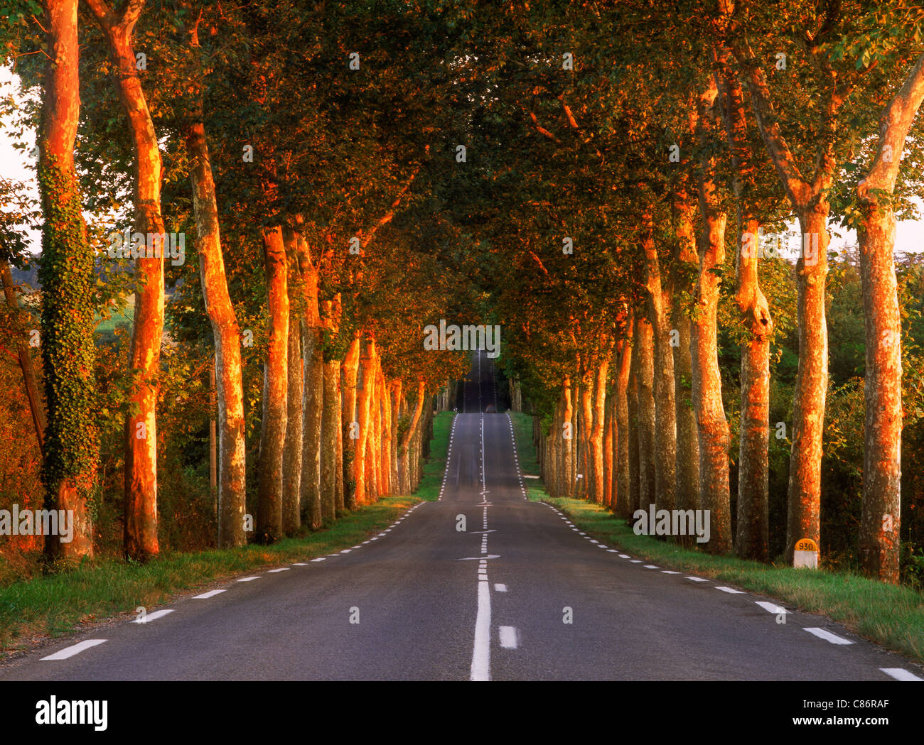 Tree lined country road near Auch in Gers Region of France - Stock Image