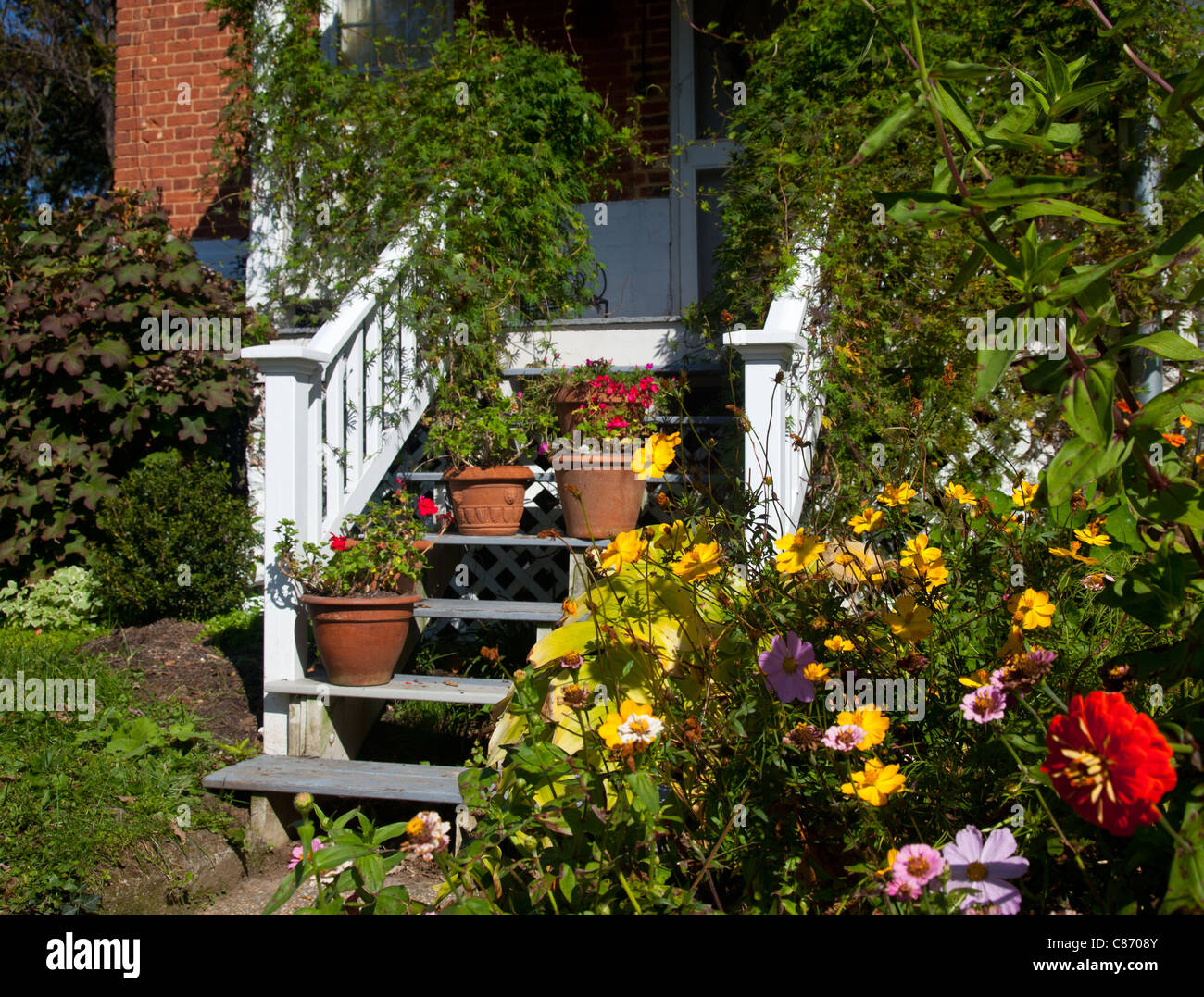 Flowering garden surrounds the white painted wooden stairs leading to front door of house Stock Photo