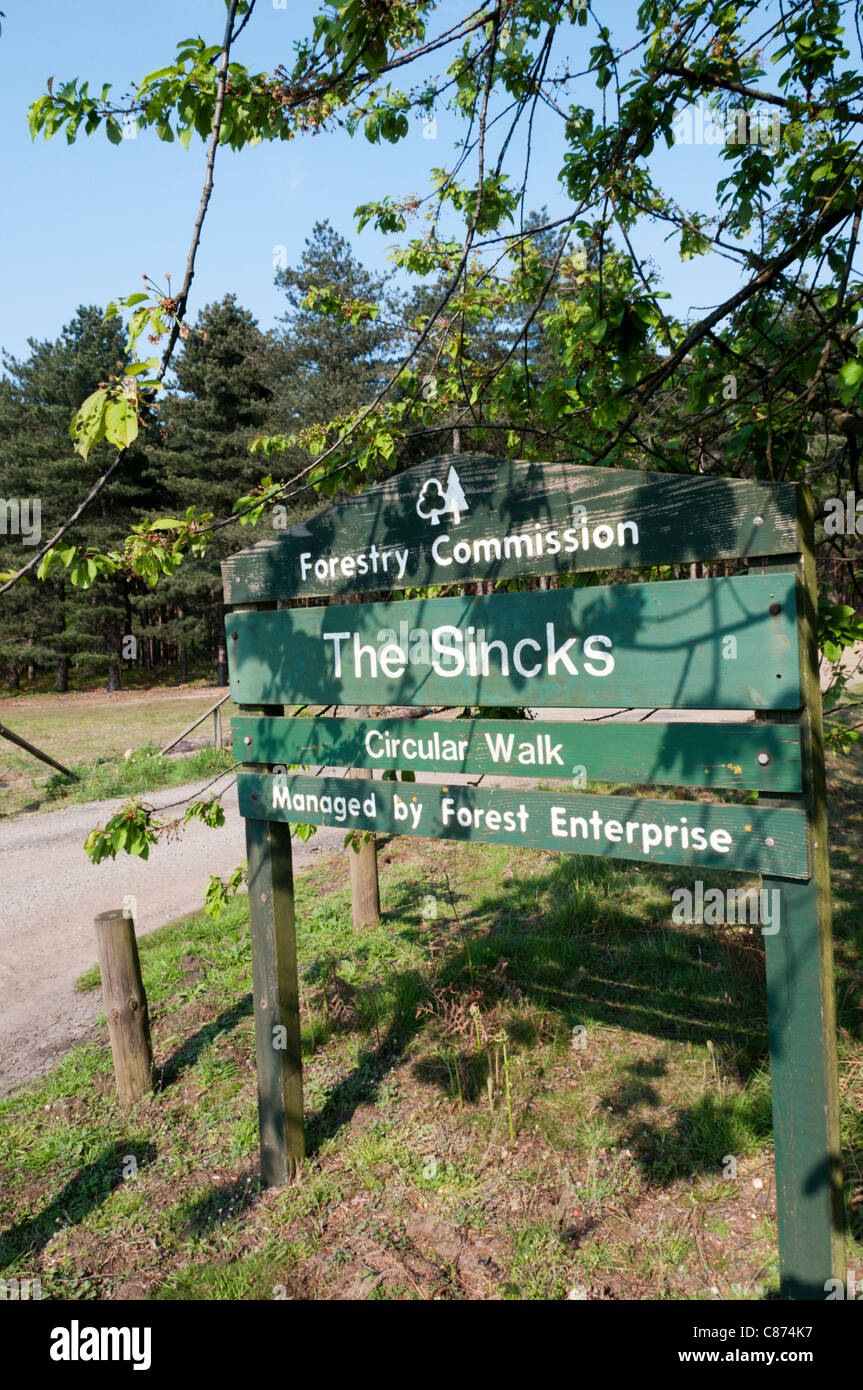 Sign for a circular walk at The Sincks Forestry Commission woodland in Thetford Forest Park. - Stock Image