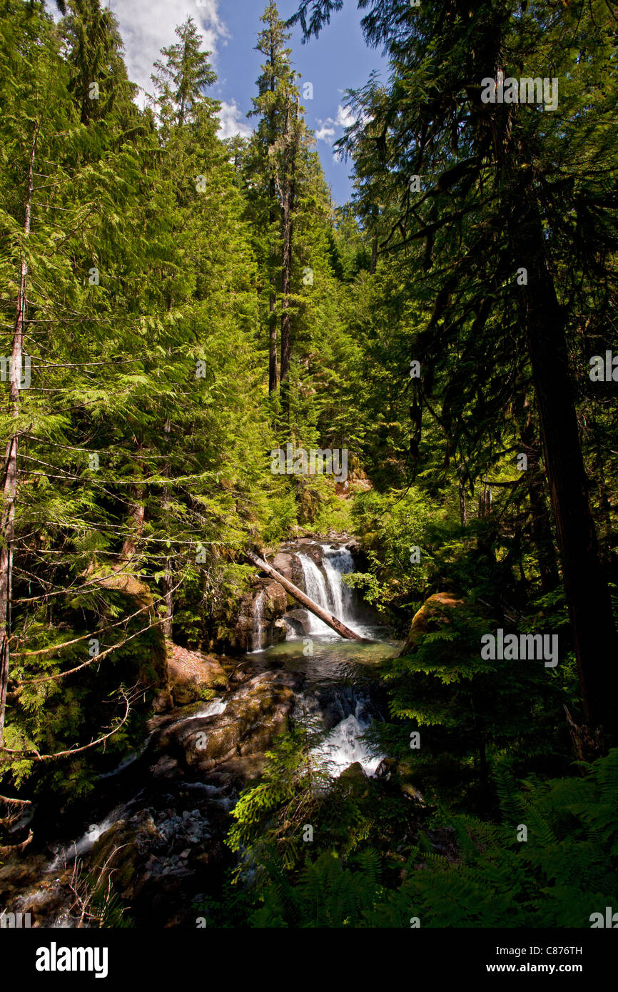 Scene on the Mohawk river, in unspoilt National Forest, central Oregon - Stock Image
