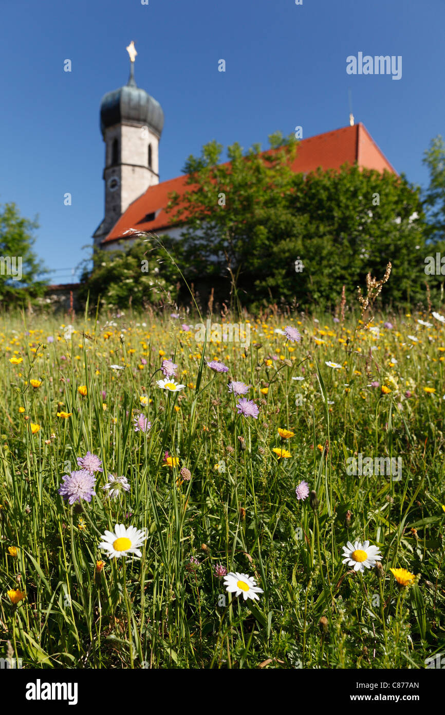 Germany, Bavaria, Upper Bavaria, Dietramszell, Lochen, View of St. Magdalena church with flower meadow in foreground - Stock Image