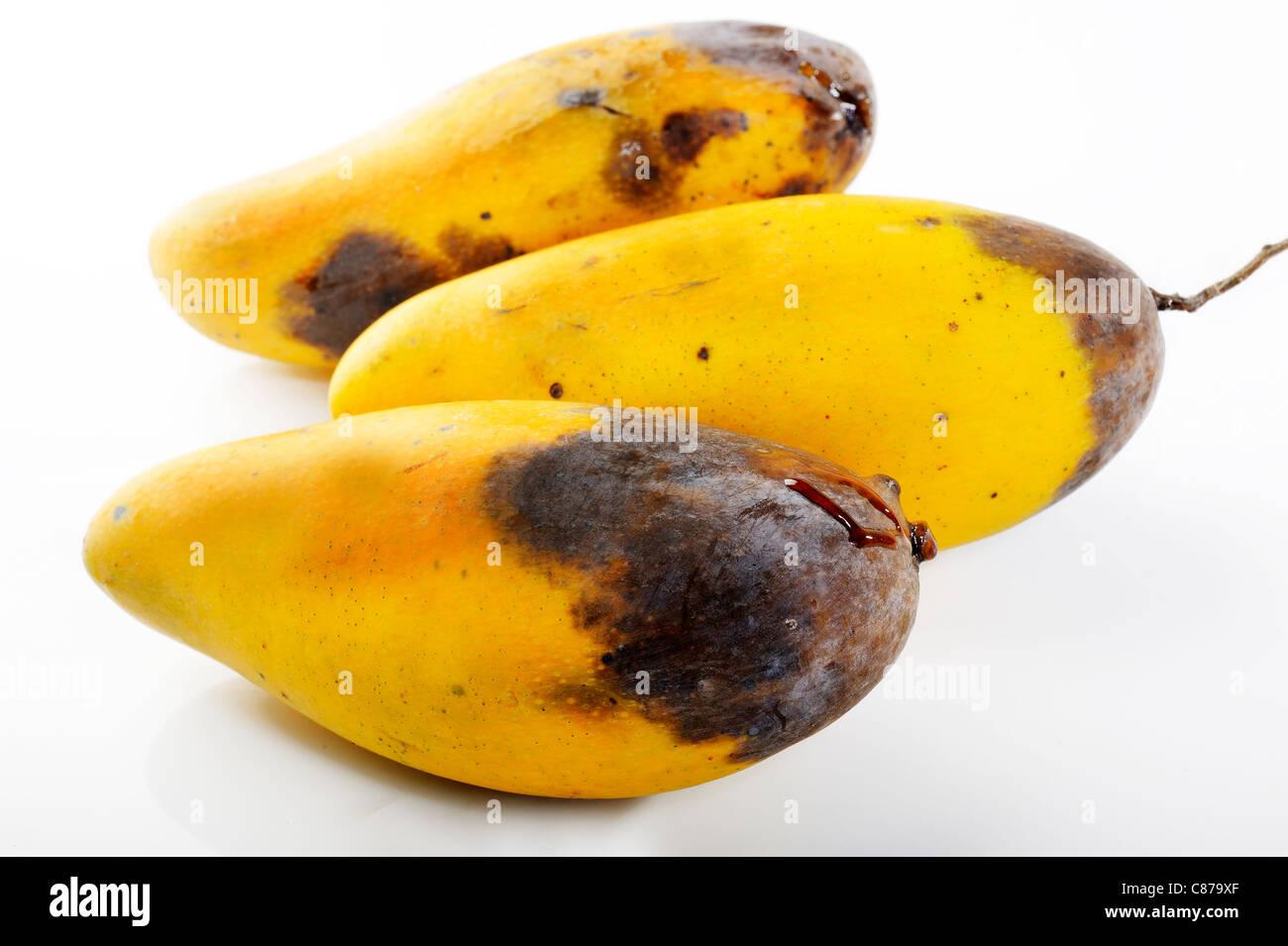 rot mango fruit on white background - Stock Image
