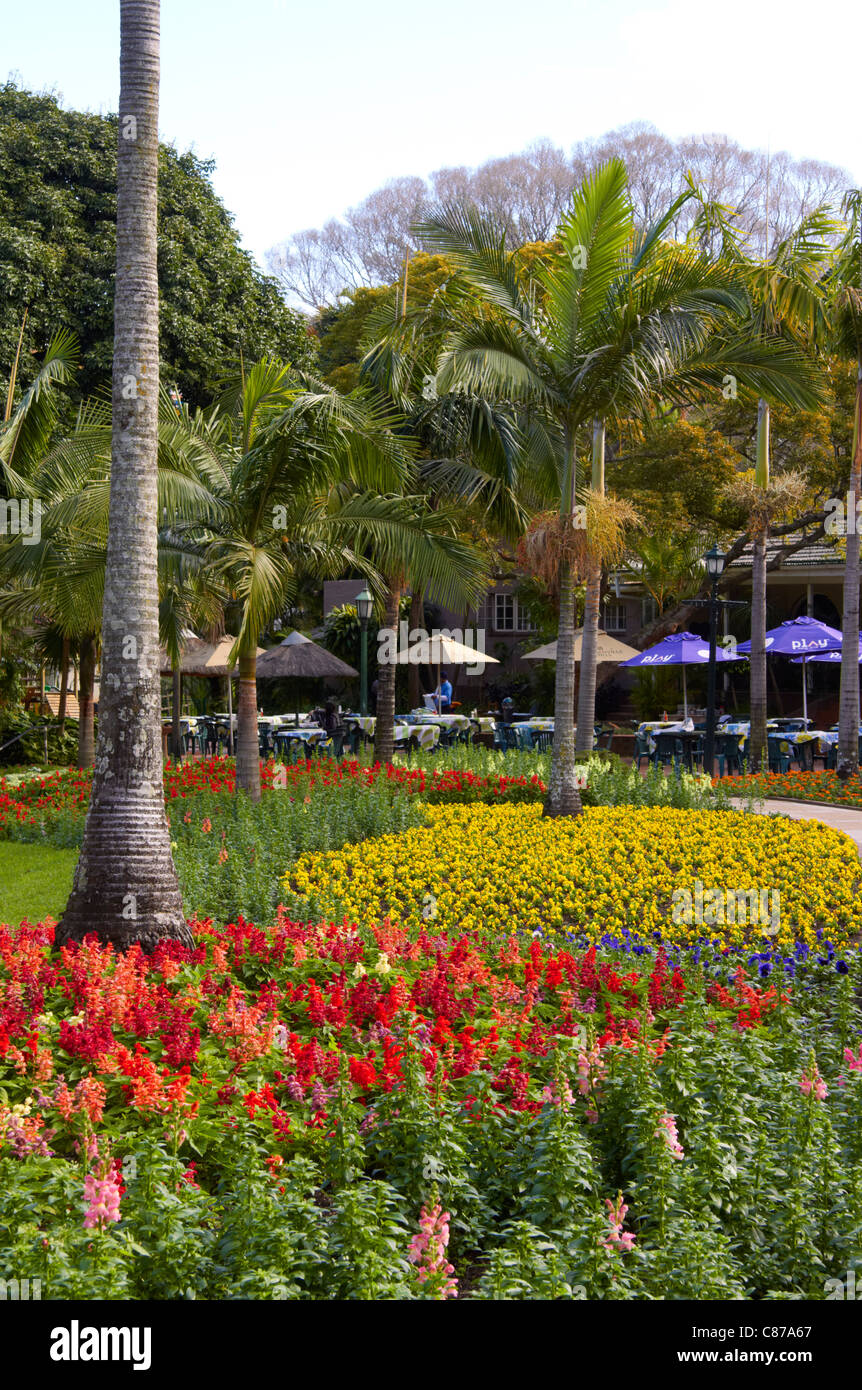 Flowerbeds in Mitchell Park, with The Blue Zoo Restaurant in the background. Morningside, Durban, KwaZulu-Natal, - Stock Image