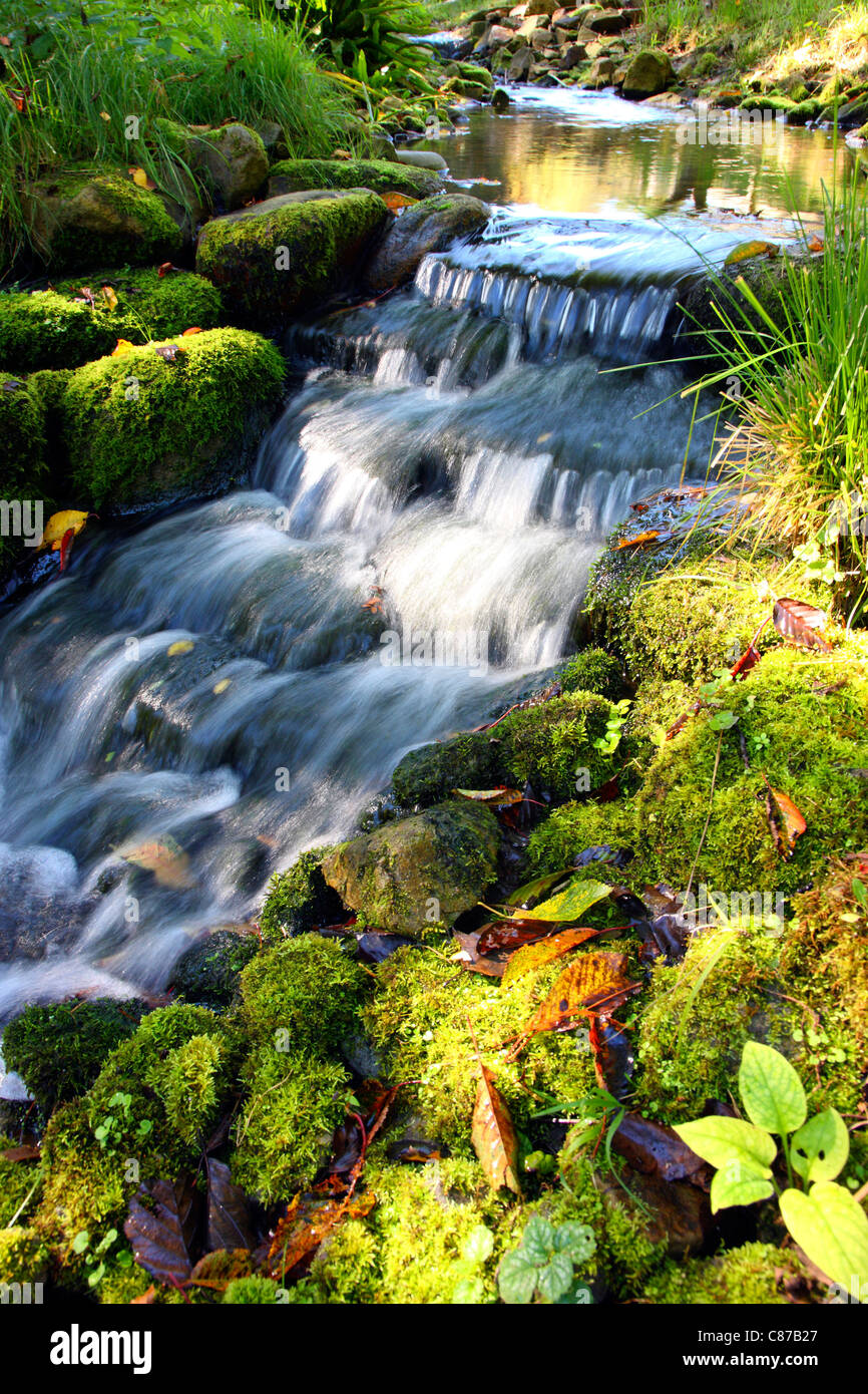 Little creek in a forest. Bochum, Germany. - Stock Image