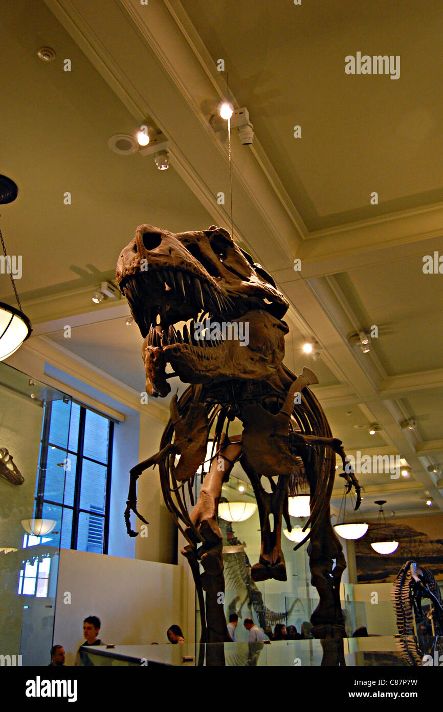 American Museum of Natural History, New York City - Stock Image