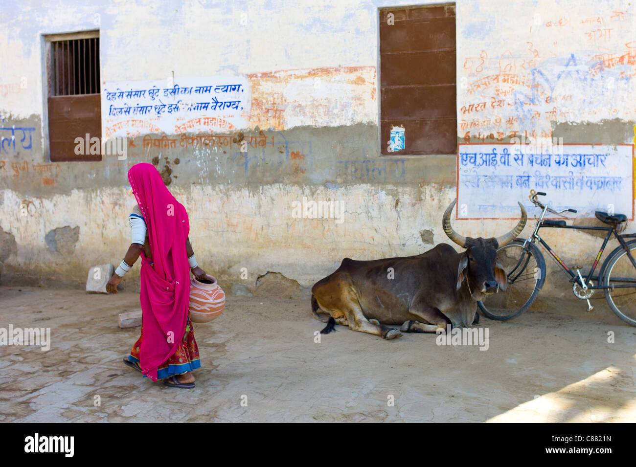 Indian woman carrying water pot past a bull lying by Hindu Temple in Narlai village in Rajasthan, Northern India - Stock Image