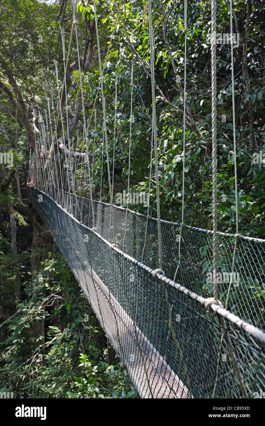Canopy walk in the Taman Negara's rainforest, Malaysia Stock Photo