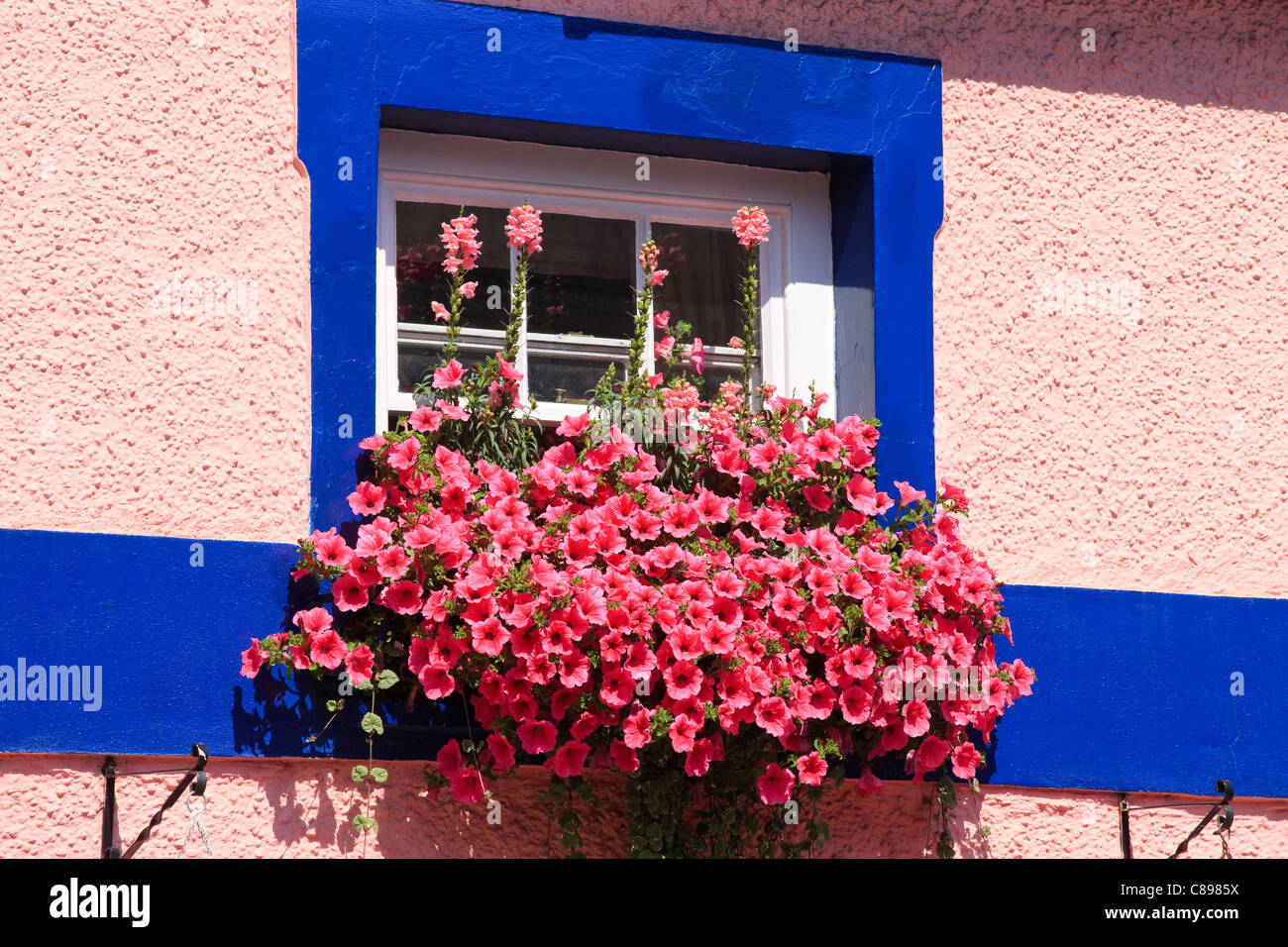 Colourful window box Fishguard Pembrokeshire Wales - Stock Image