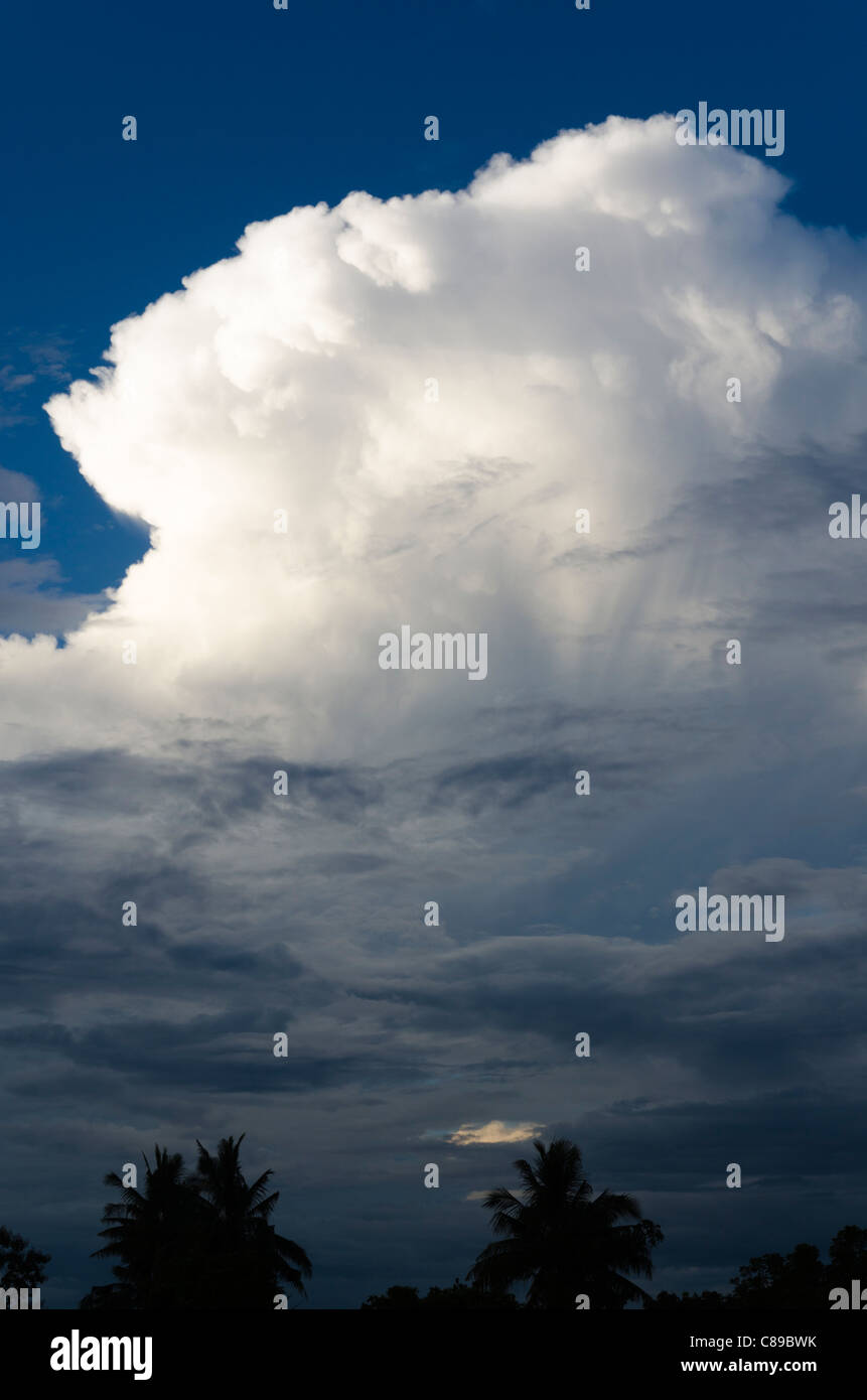 Cumulonimbus cloud forms in darkening skies above coconut palm trees in Thailand - Stock Image
