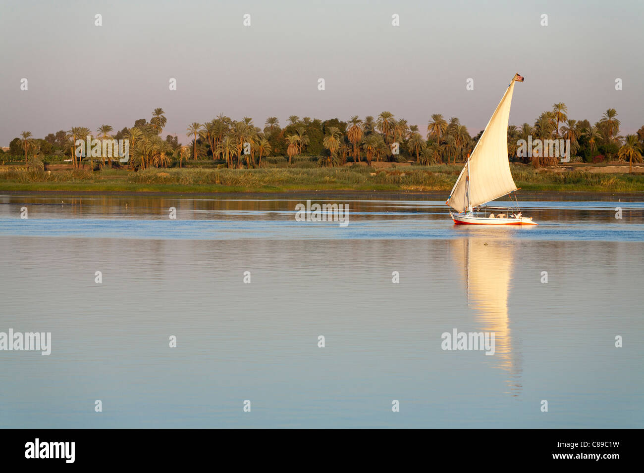 Nile felluca sailing right to left reflected on very calm water with palm and tree lined Nile bank behind, Egypt - Stock Image