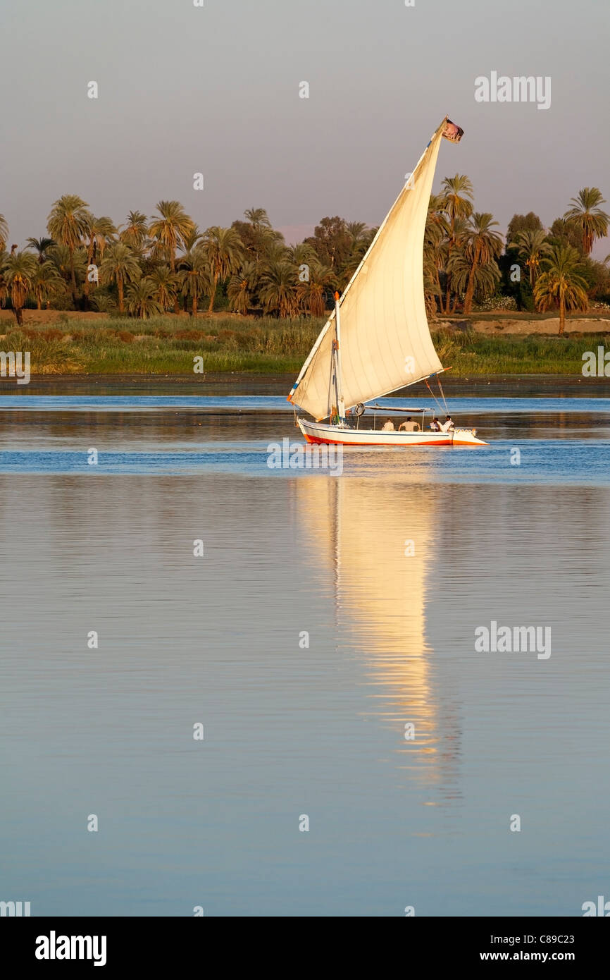 Nile felluca sailing right to left reflected on very calm water with palm and tree lined Nile bank behind Egypt - Stock Image