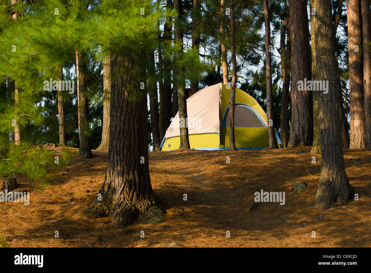 camping in the woods. Plain Woods Tent Camping In The Woods At A Remote Wilderness Campsite With In The