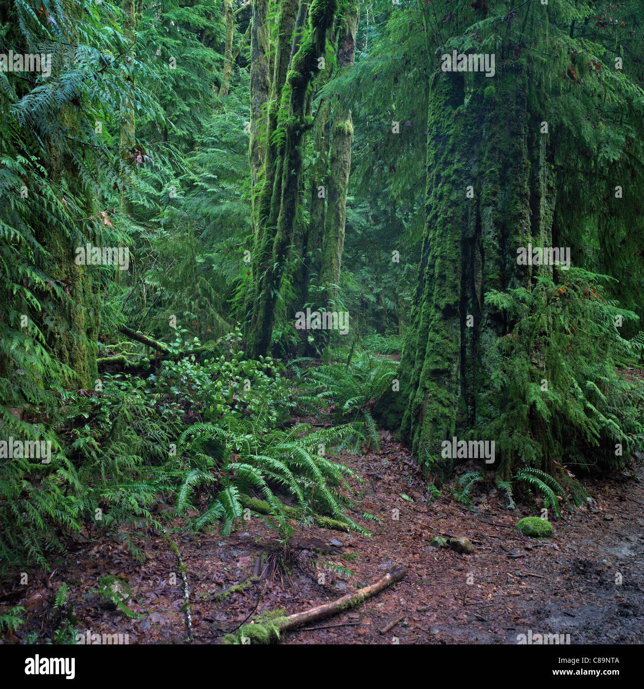 Forest in Pacific Spirit Regional Park in Vancouver, Canada - Stock Image