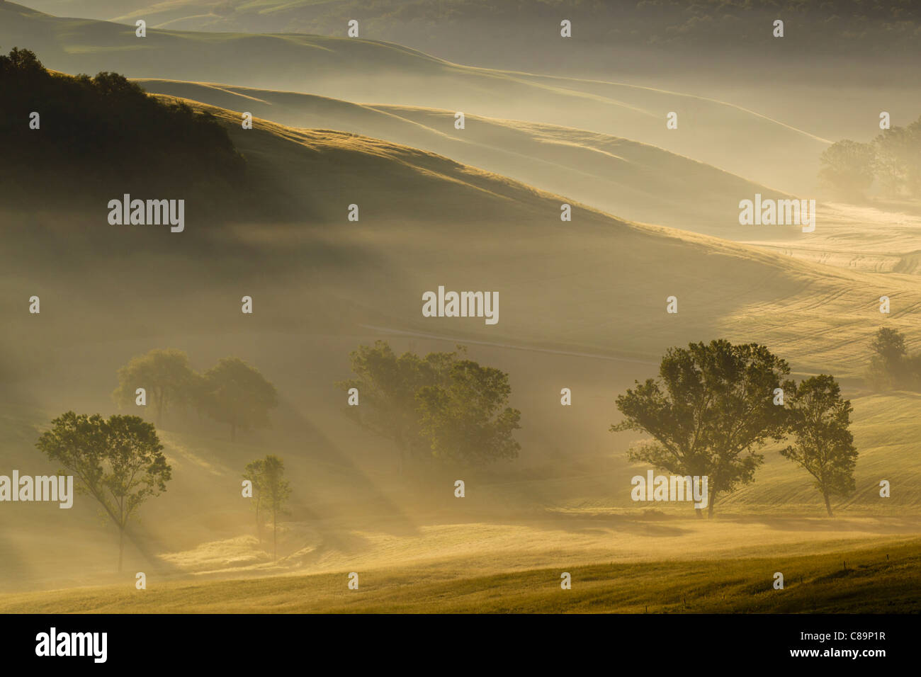 Italy, Tuscany, Crete, View of trees and fog in morning - Stock Image