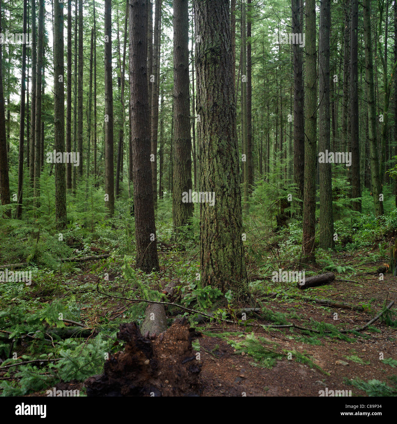 Forest, Vancouver, Canada - Pacific Spirit Regional Park - Stock Image