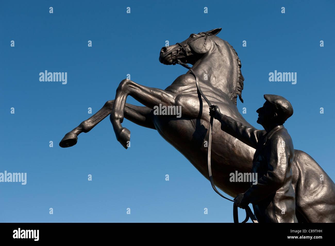 the newmarket stallion, suffolk, england - Stock Image