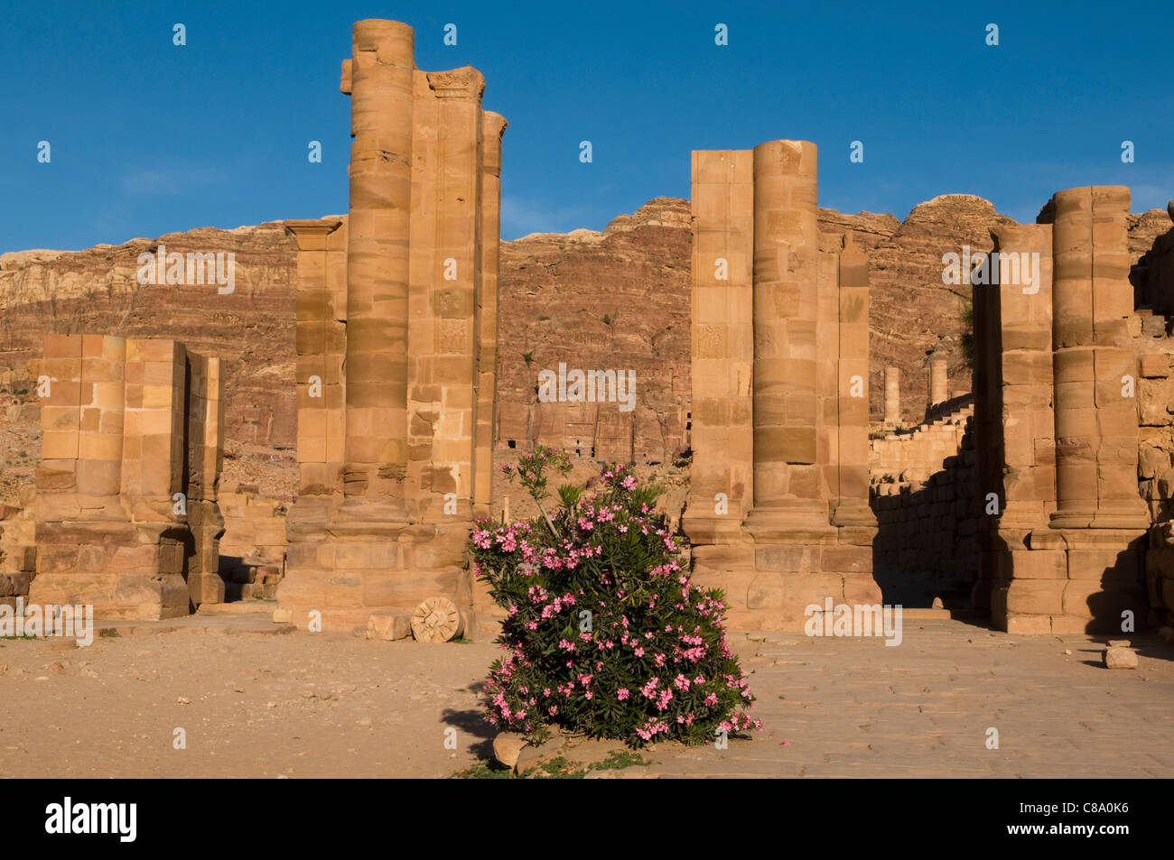 ancient columns and oleander bush in Petra, the UNESCO World Heritage Site in Jordan Stock Photo
