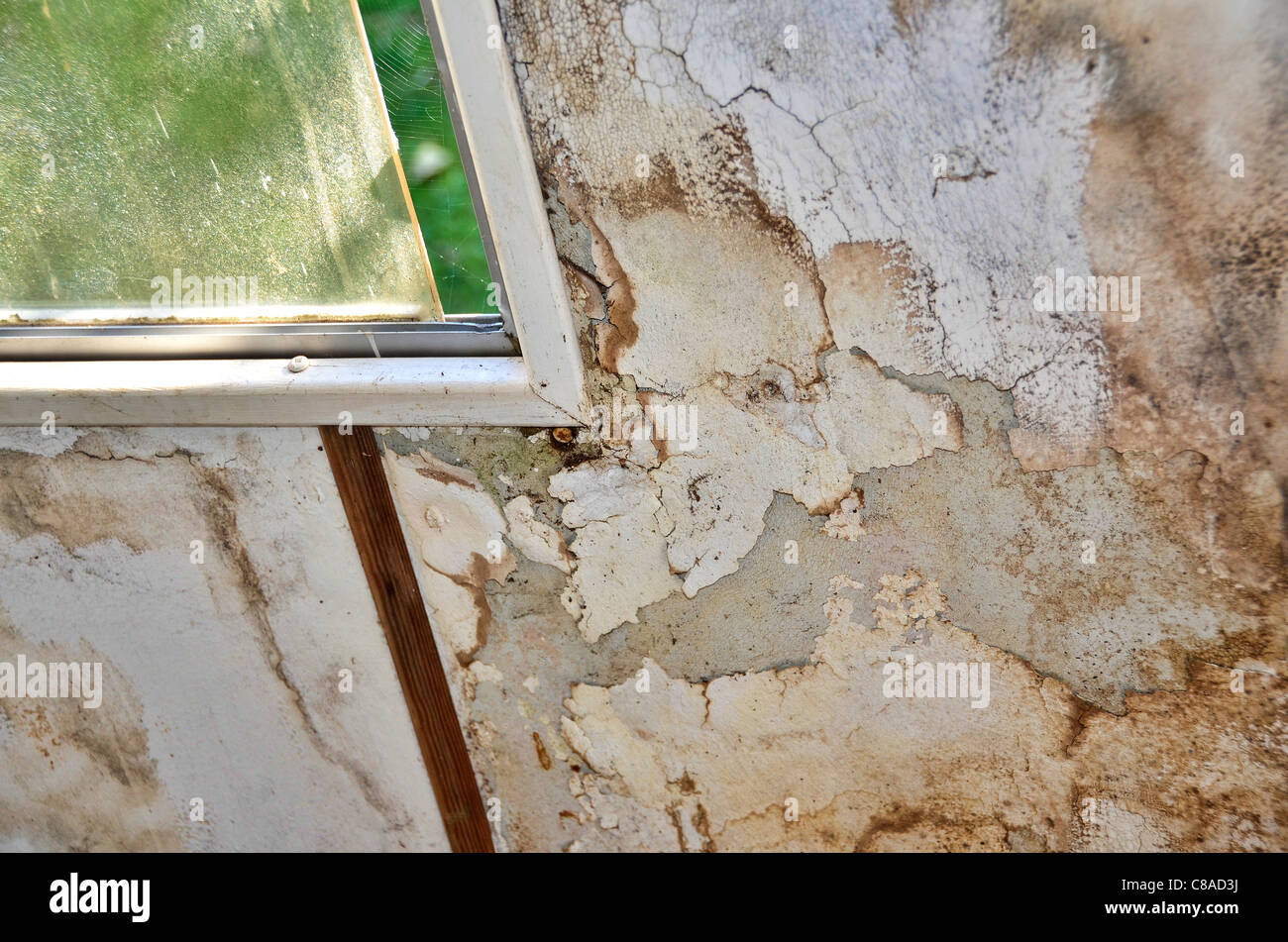 Wall with mildew, leaking window - Stock Image