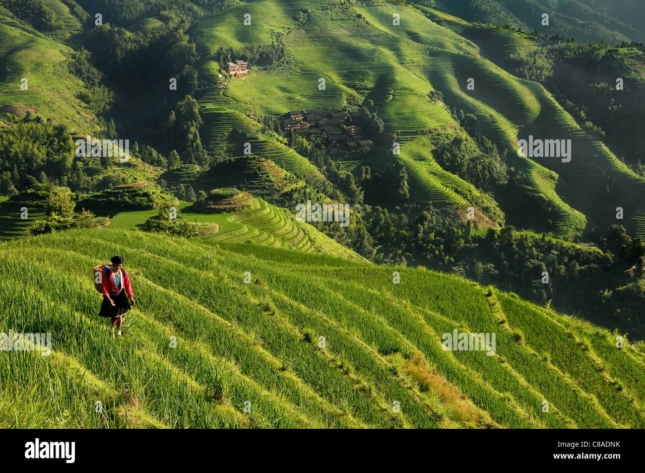 Local woman walking along the rice terraces in the dragon backbone terraces. - Stock Image