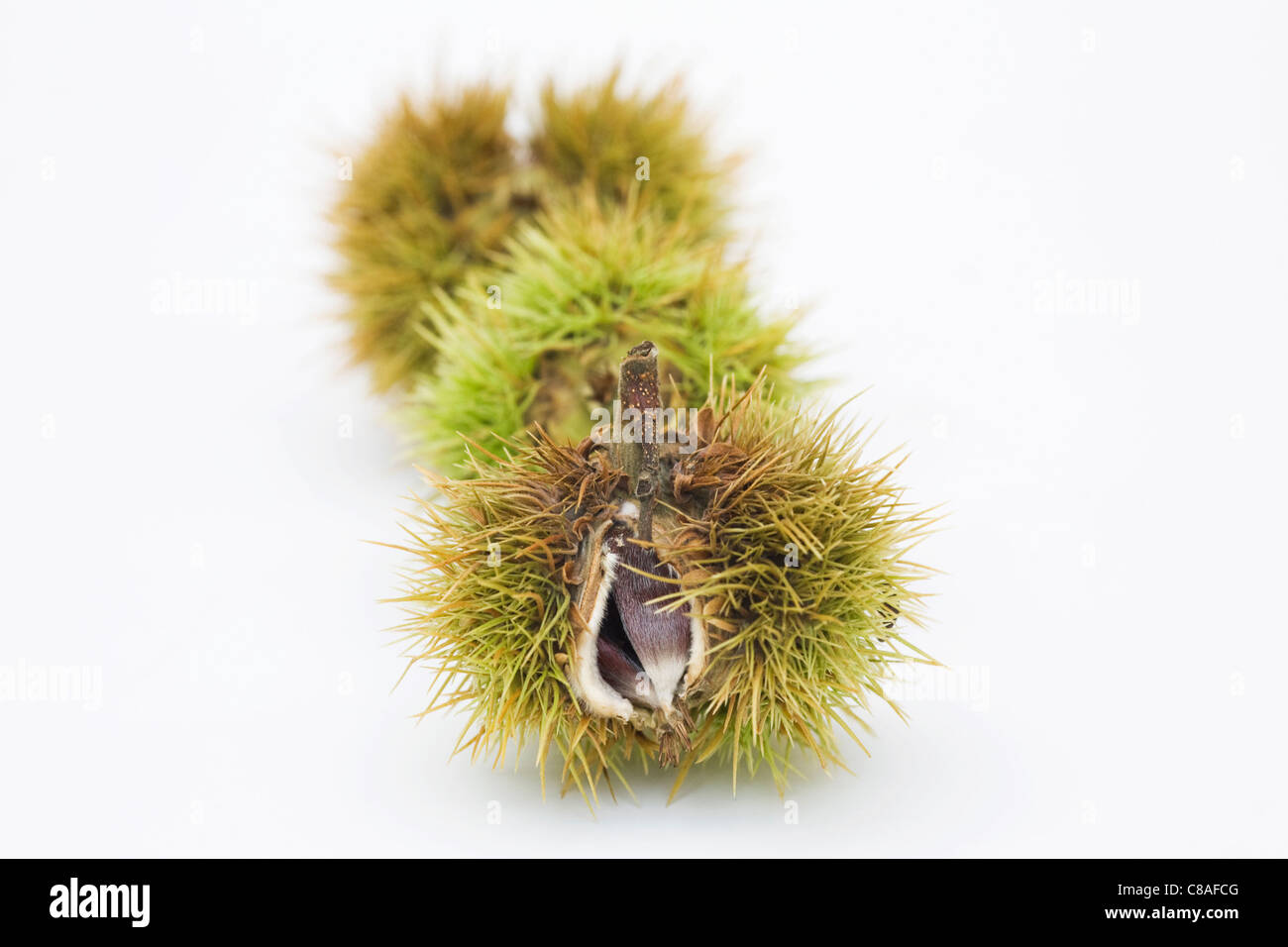 Castanea sativa. Sweet Chestnuts isolated on a white background. Stock Photo