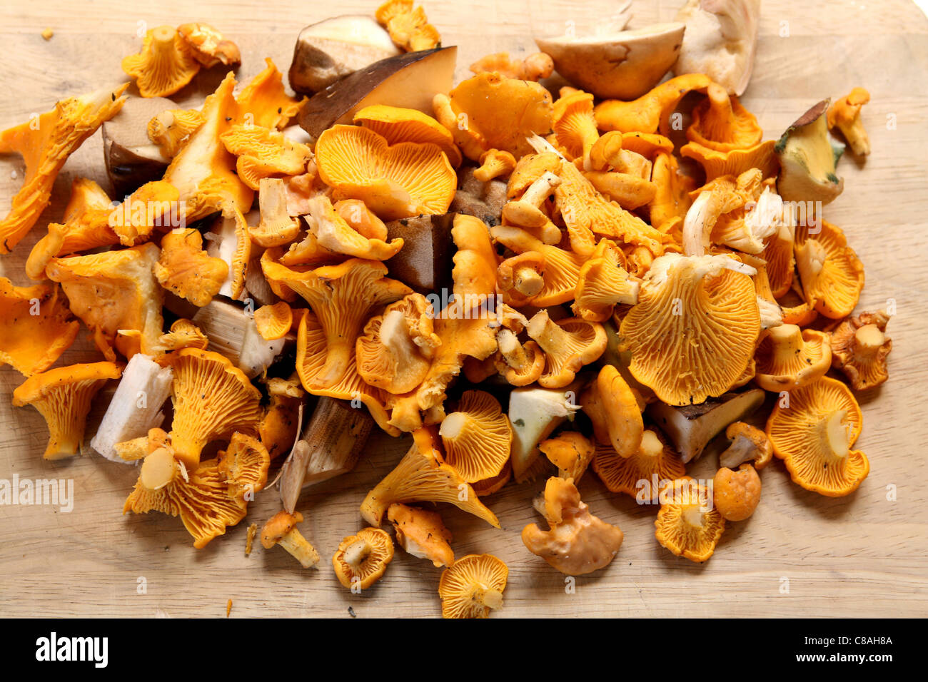 Heap of chanterelles and boletus mushrooms - Stock Image