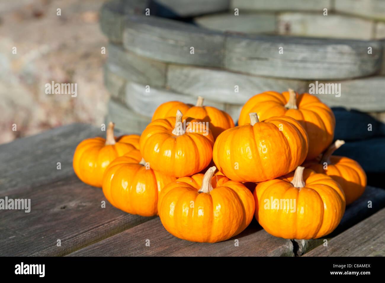 Miniature decorative pumpkins - Stock Image