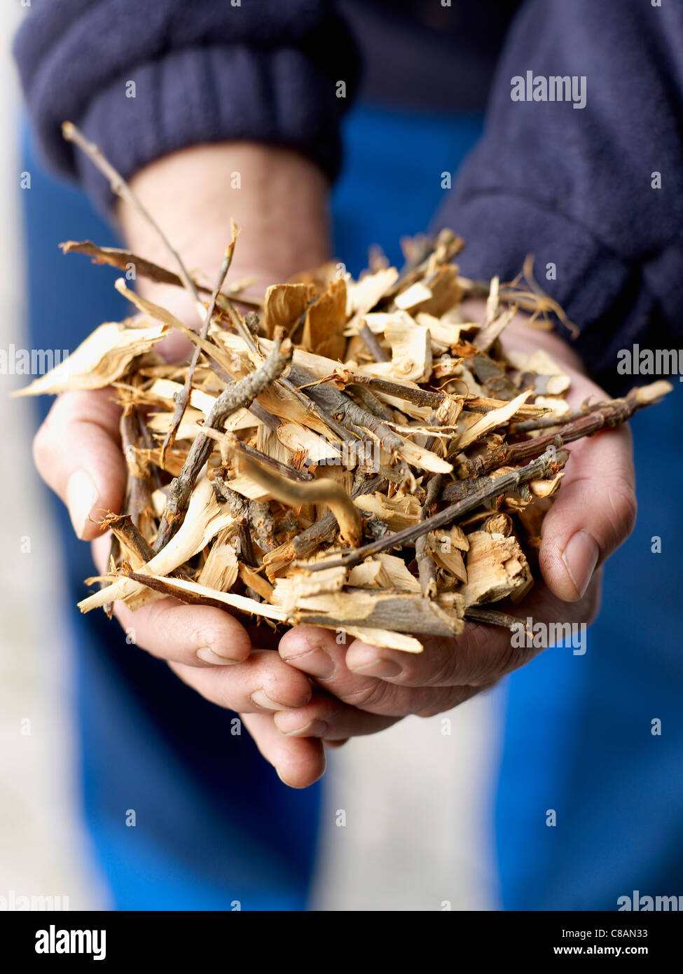 Handful of shavings and twigs - Stock Image
