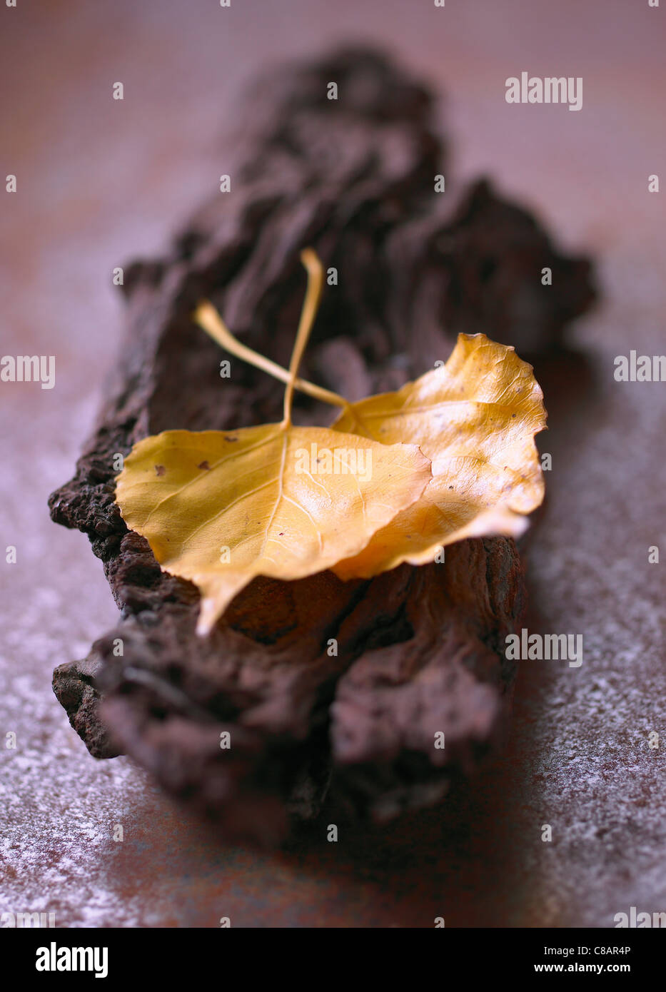 Yellow leaves on a piece of bark - Stock Image