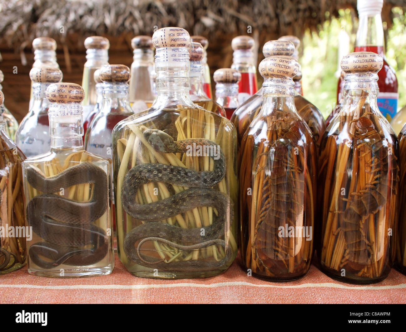 snake liquor (bottles of rice whisky with snakes and centipedes at a market stall in Laos, South East Asia) - Stock Image