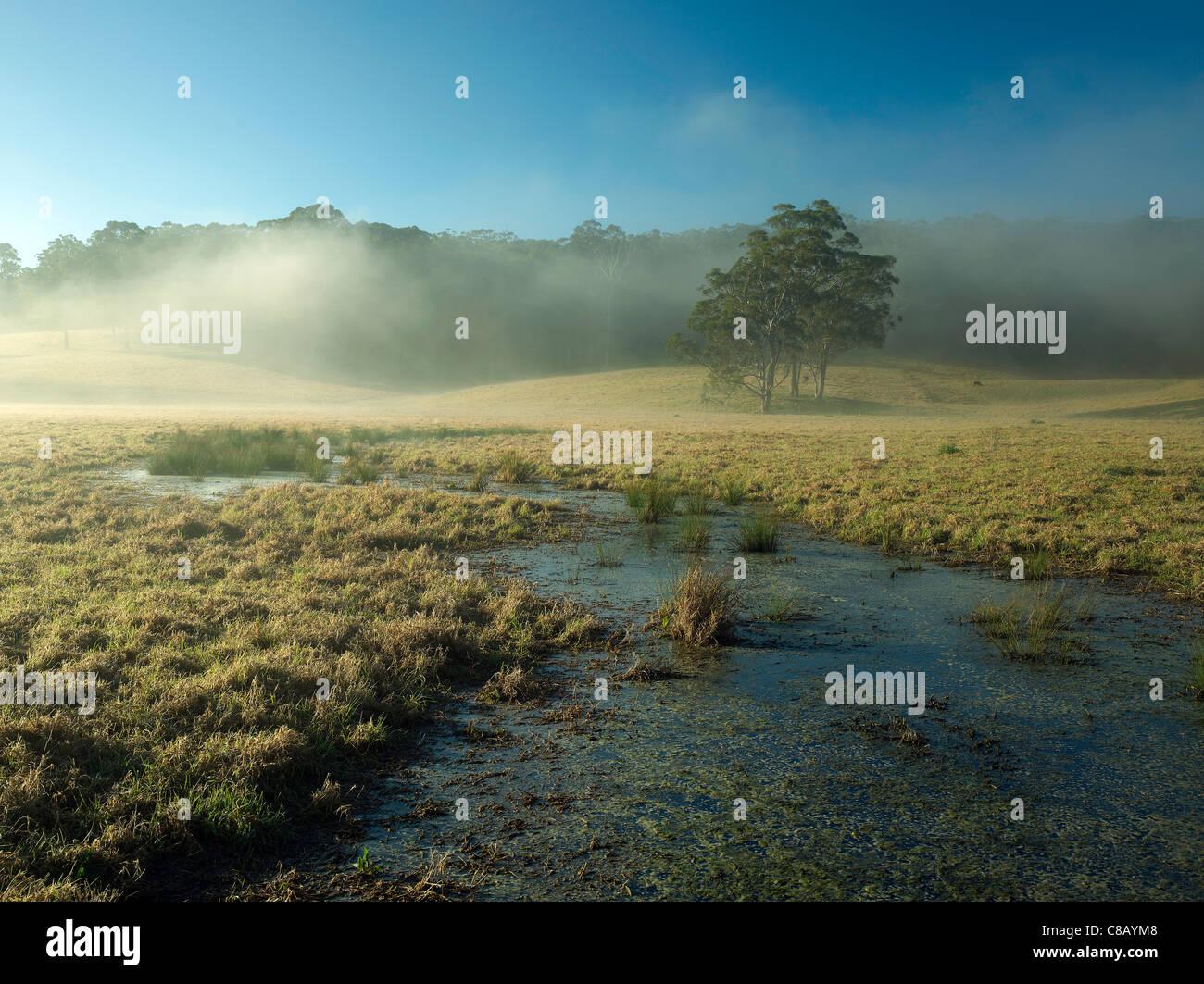 Morning mists waft along a valley  on a farm near Tilba, South Coast NSW Australia - Stock Image