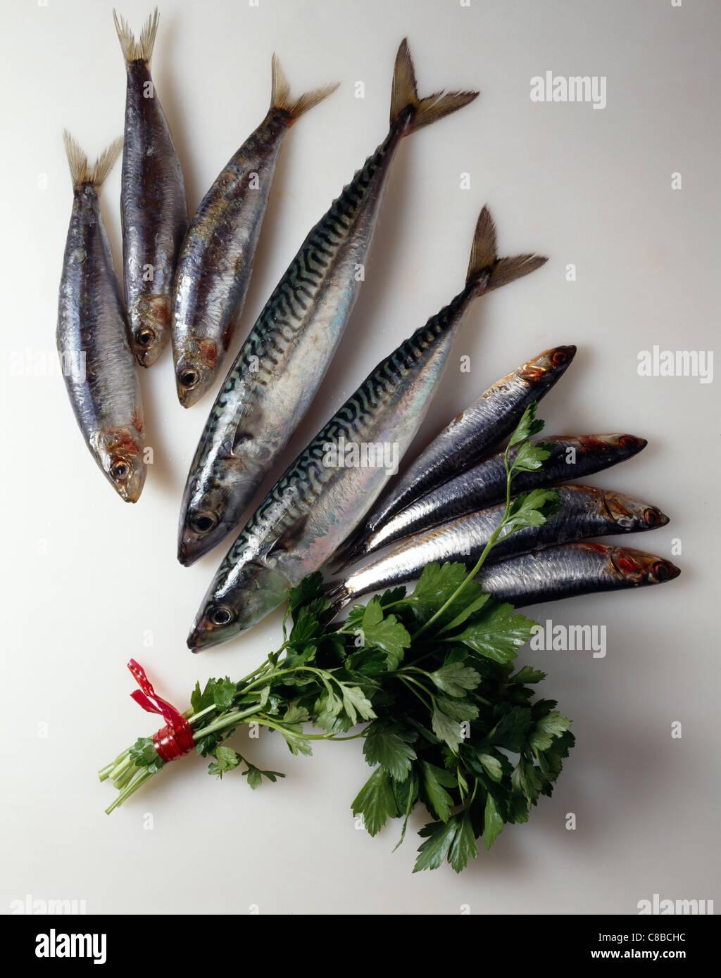 Fresh mackerel, sardines and anchovies - Stock Image