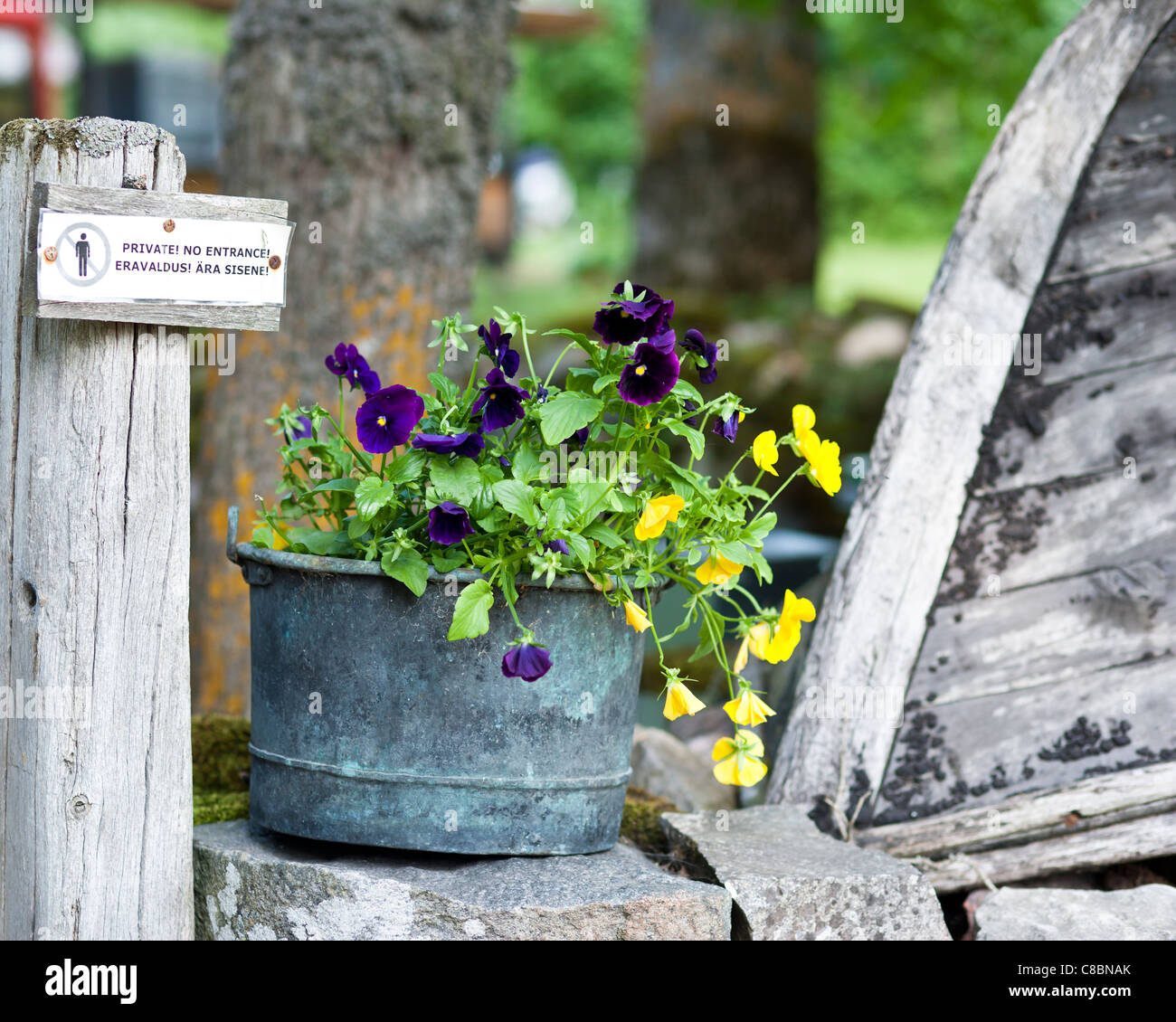 Flowerpot with pansies on top of a stonewall - Stock Image