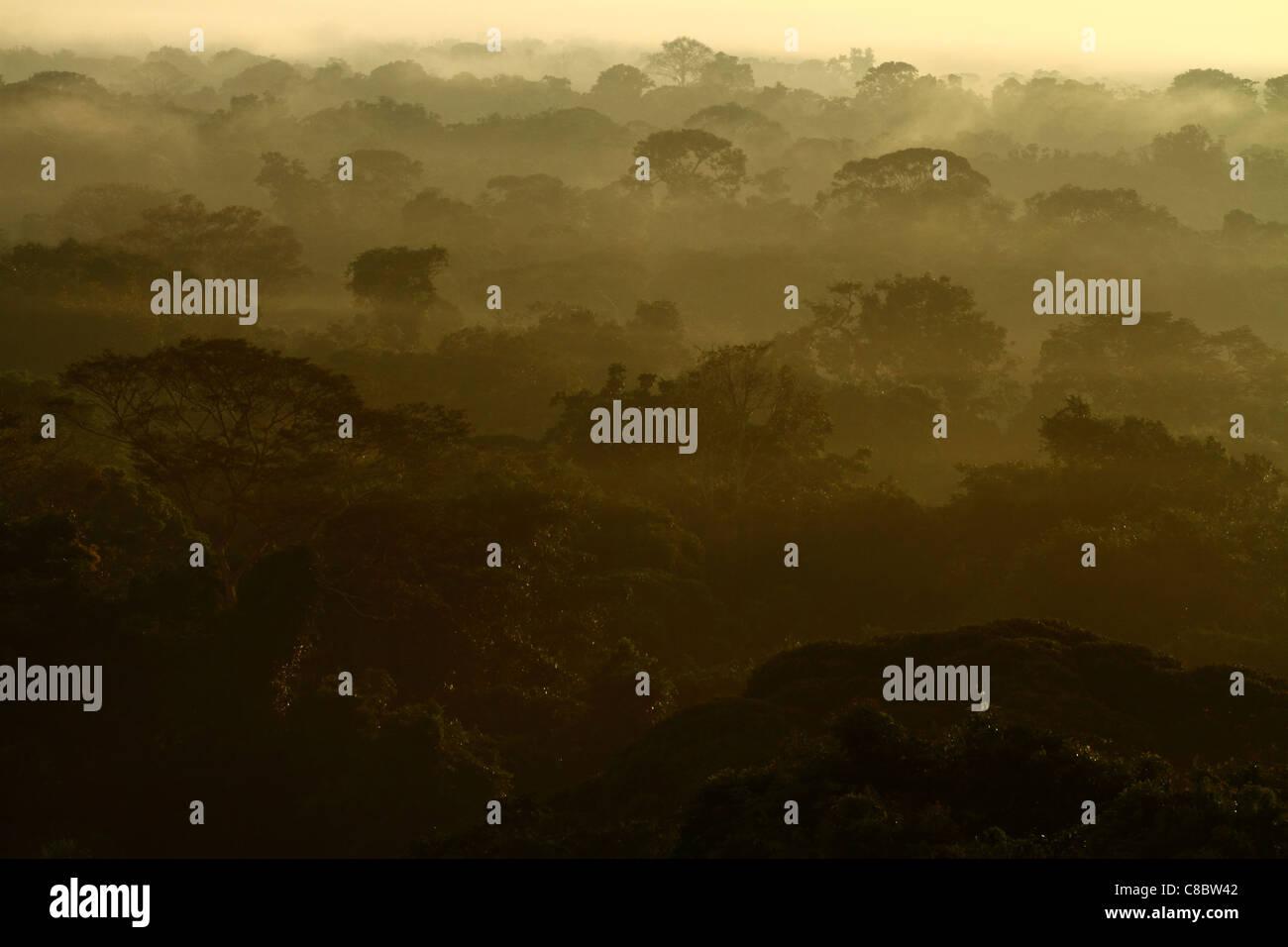 Amazon Jungle, Brazil - Stock Image