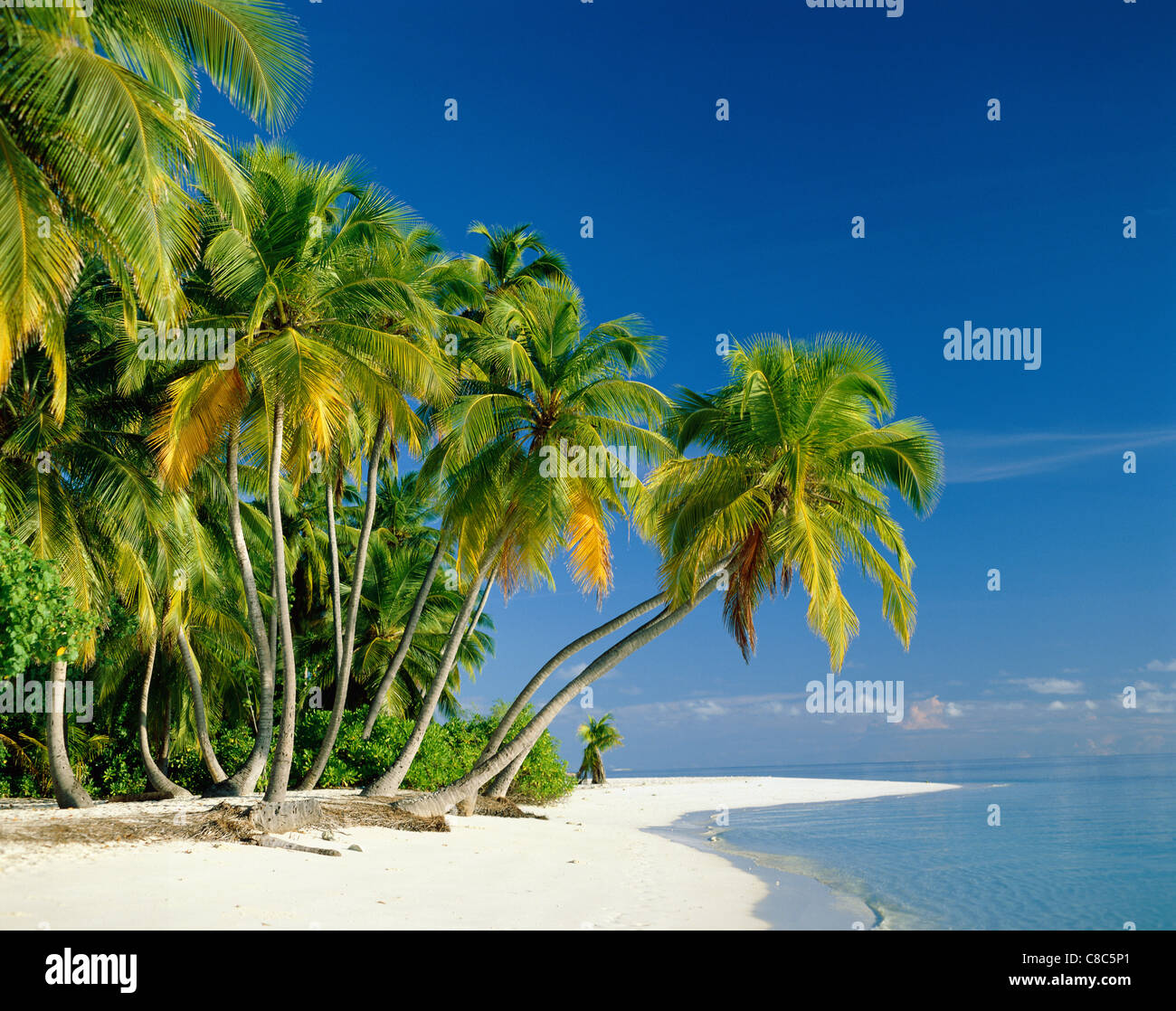 Atoll, Palm Trees & Tropical Beach, Maldive Islands - Stock Image