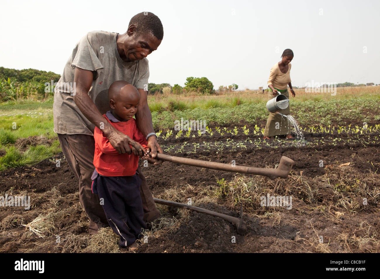 A farmer teaches his young son to hoe in Mongu, Zambia, Southern Africa. - Stock Image