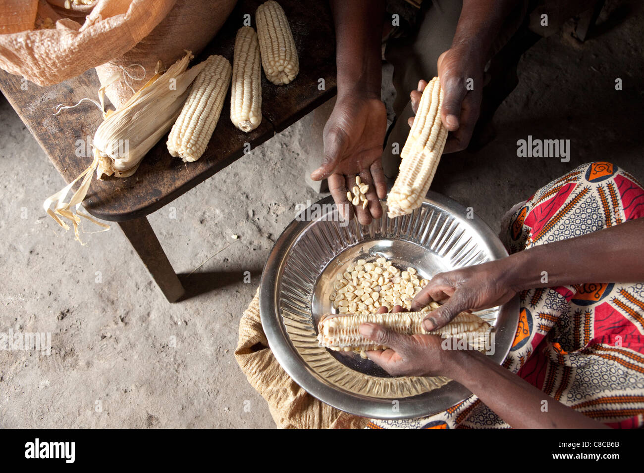 A couple removes maize kernels from the cobb in Mongu, Zambia, Southern Africa. - Stock Image
