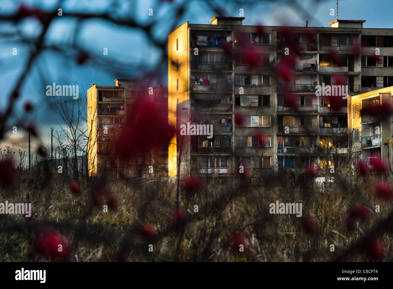 The Gipsy ghetto of Chanov seen through a dog rose bush on outskirts of Most, Czech Republic. - Stock Image