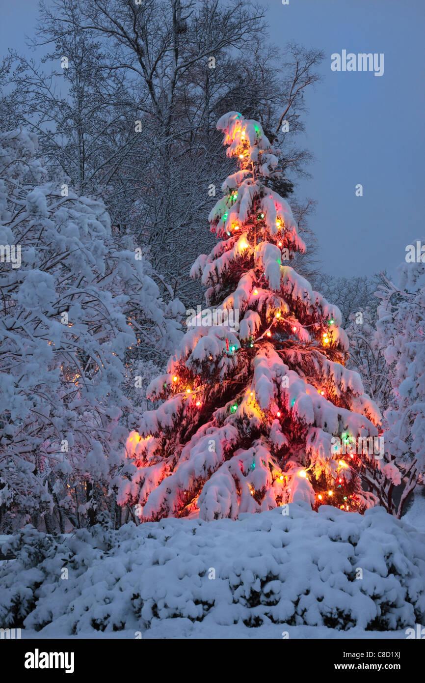 christmas tree lights snow outdoor stock photos. Black Bedroom Furniture Sets. Home Design Ideas