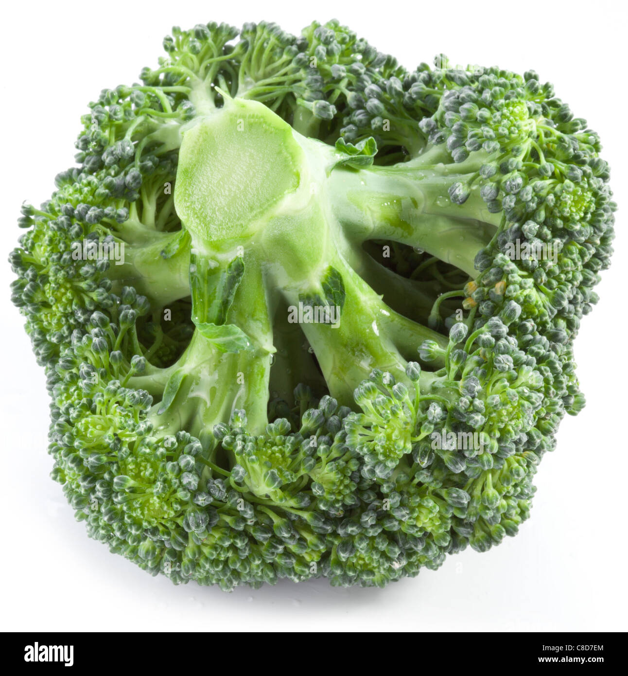 Broccoli on a white background. - Stock Image