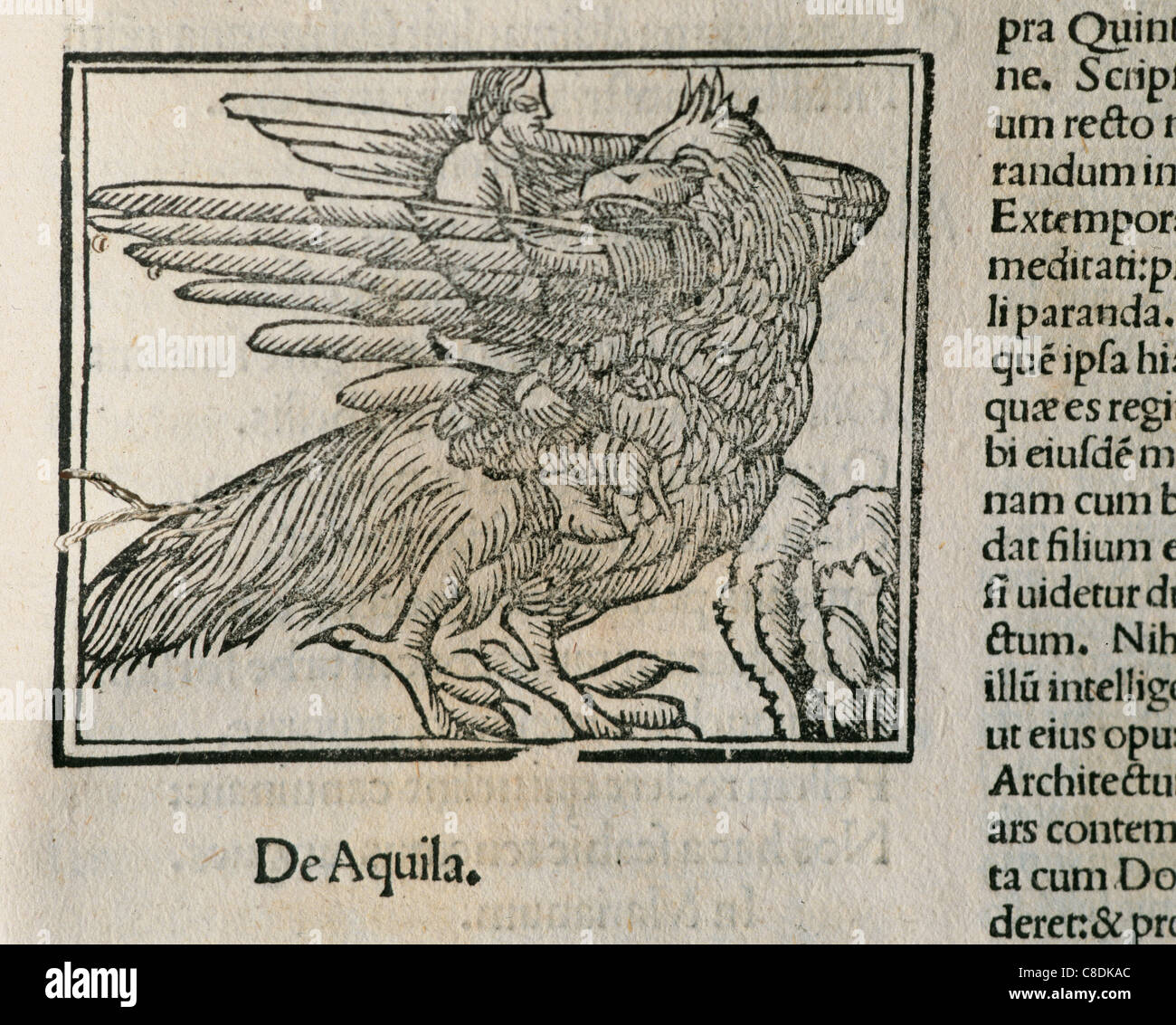 Eagle. Detail of the book Epigrams by Martial (40-104), latin poet. Latin edition. Venice. 1514. - Stock Image