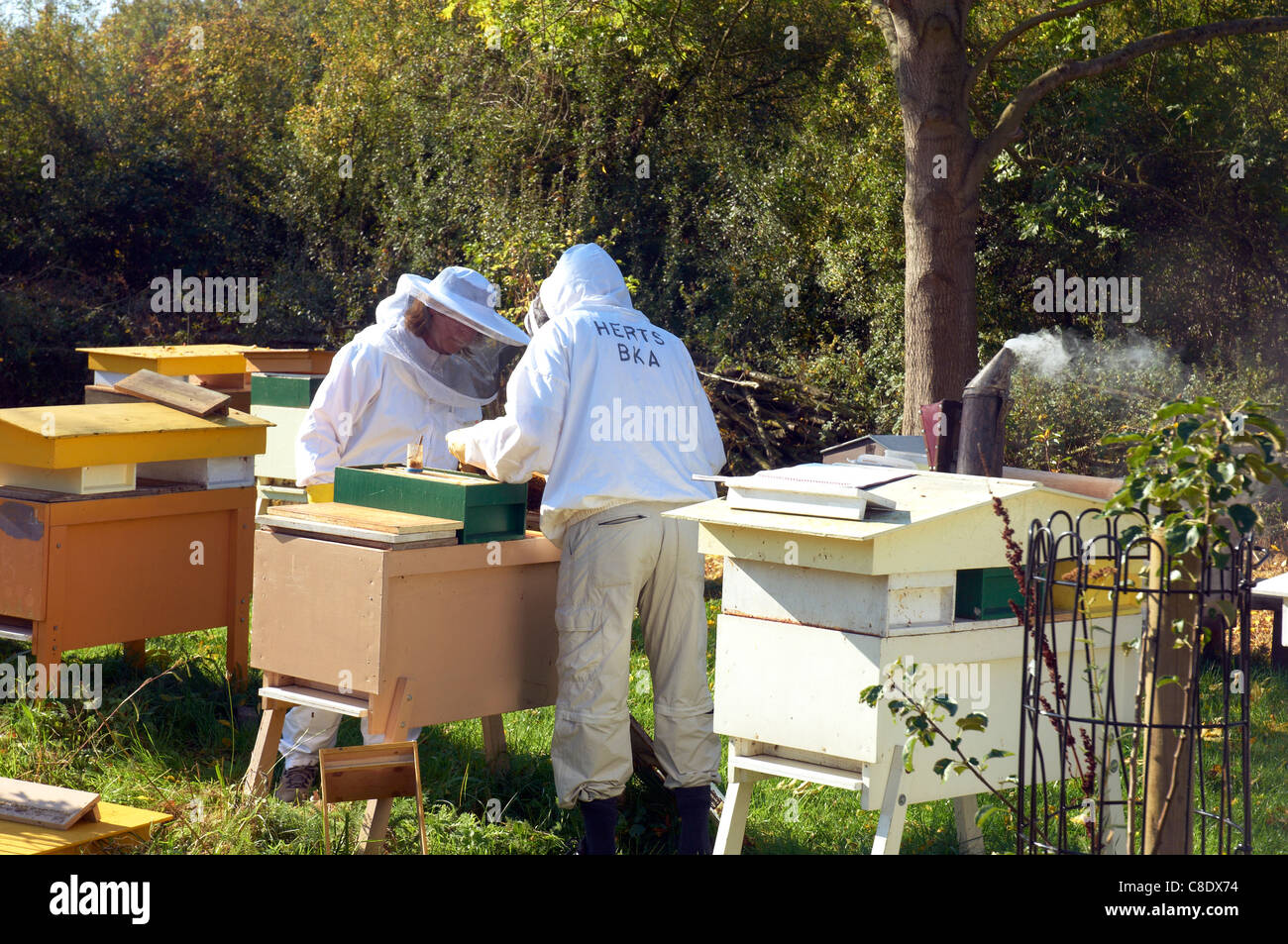 Two Beekeepers checking the Hives before Winter, UK - Stock Image