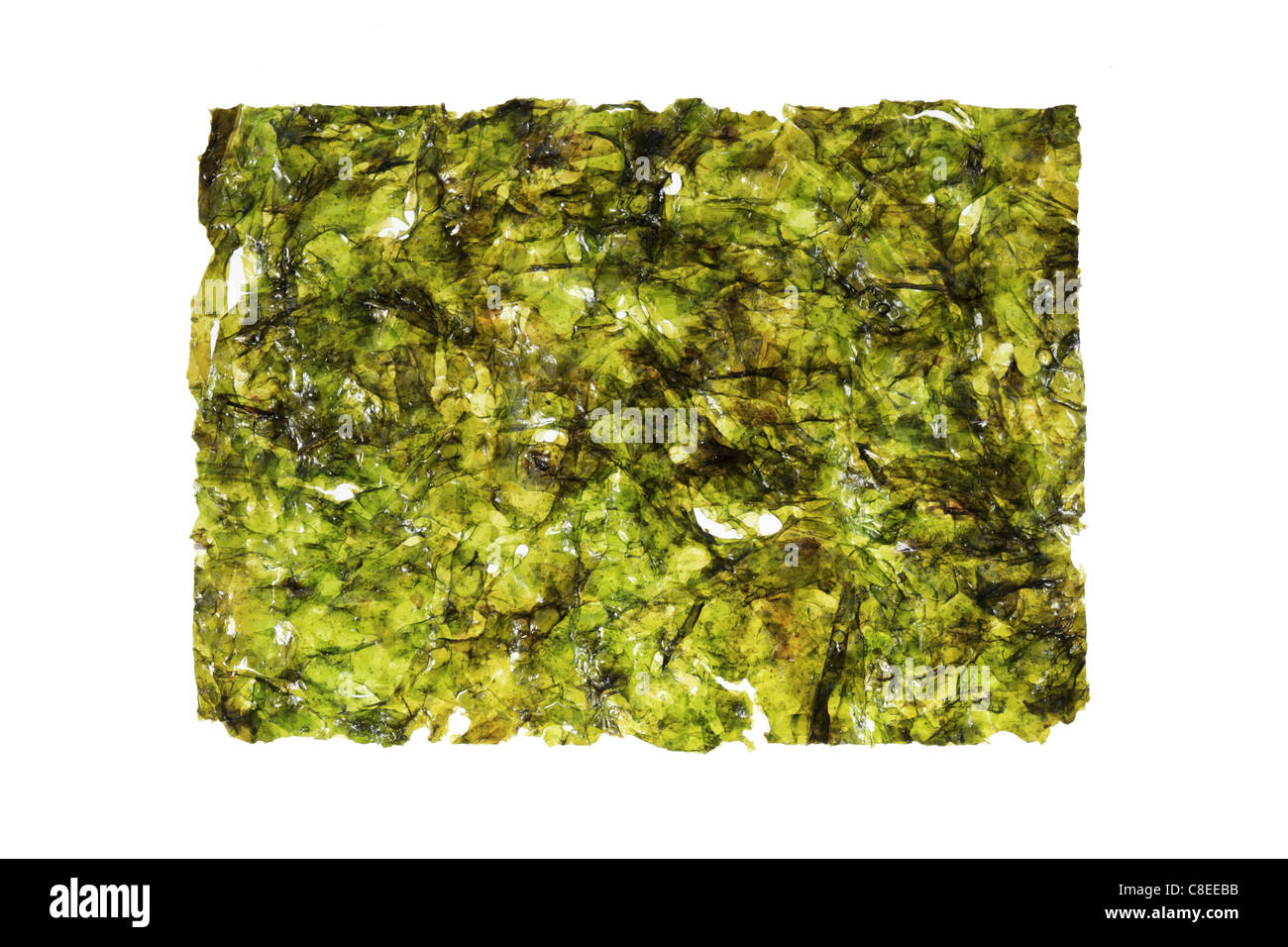 nori seaweed sheet isolated on white background - Stock Image