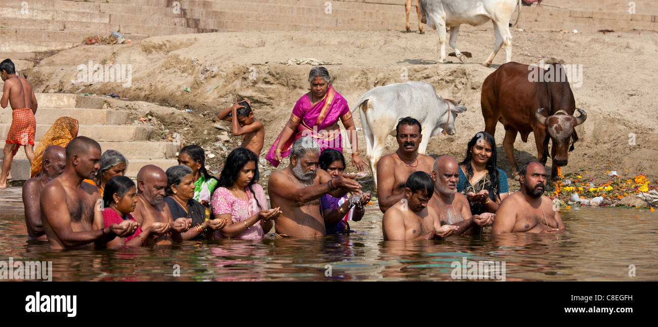 78bb7b41185 Indian Hindu men and women bathing and praying in the River Ganges by  Kshameshwar Ghat in holy city of Varanasi, India