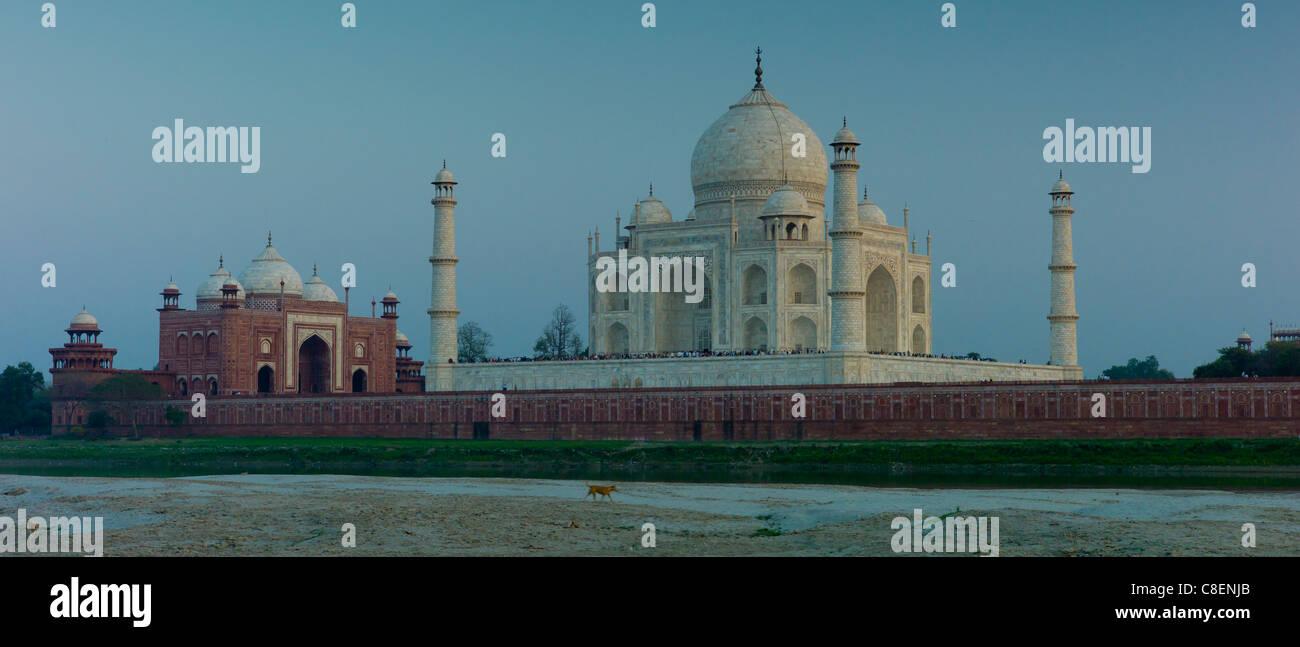 Dog strolls past The Taj Mahal North Side viewed across Yamuna River at sunset , India Stock Photo