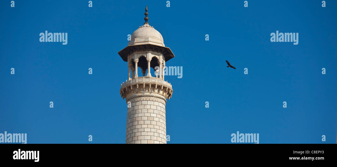 Minaret of The Taj Mahal mausoleum and Indian black kite bird, Uttar Pradesh, India - Stock Image